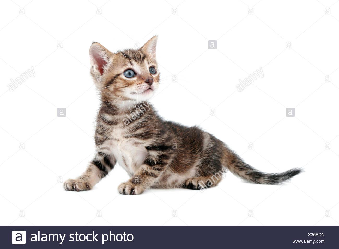 Niedlich Baby Kätzchen Färbung Seiten Zeitgenössisch - Entry Level ...