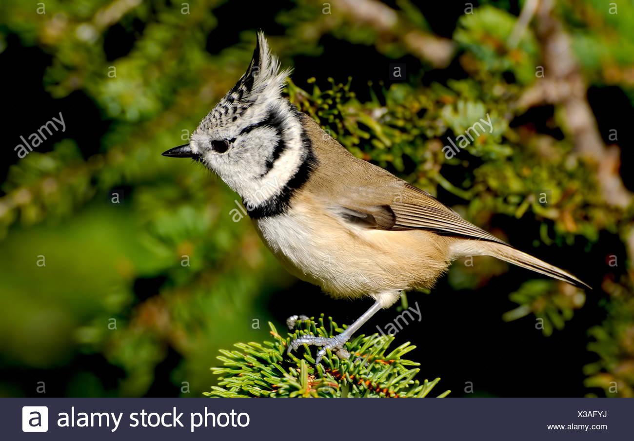 Baum Garten Vogel Vögel Verzweigen Gärten Meise Singvogel Bobolinks