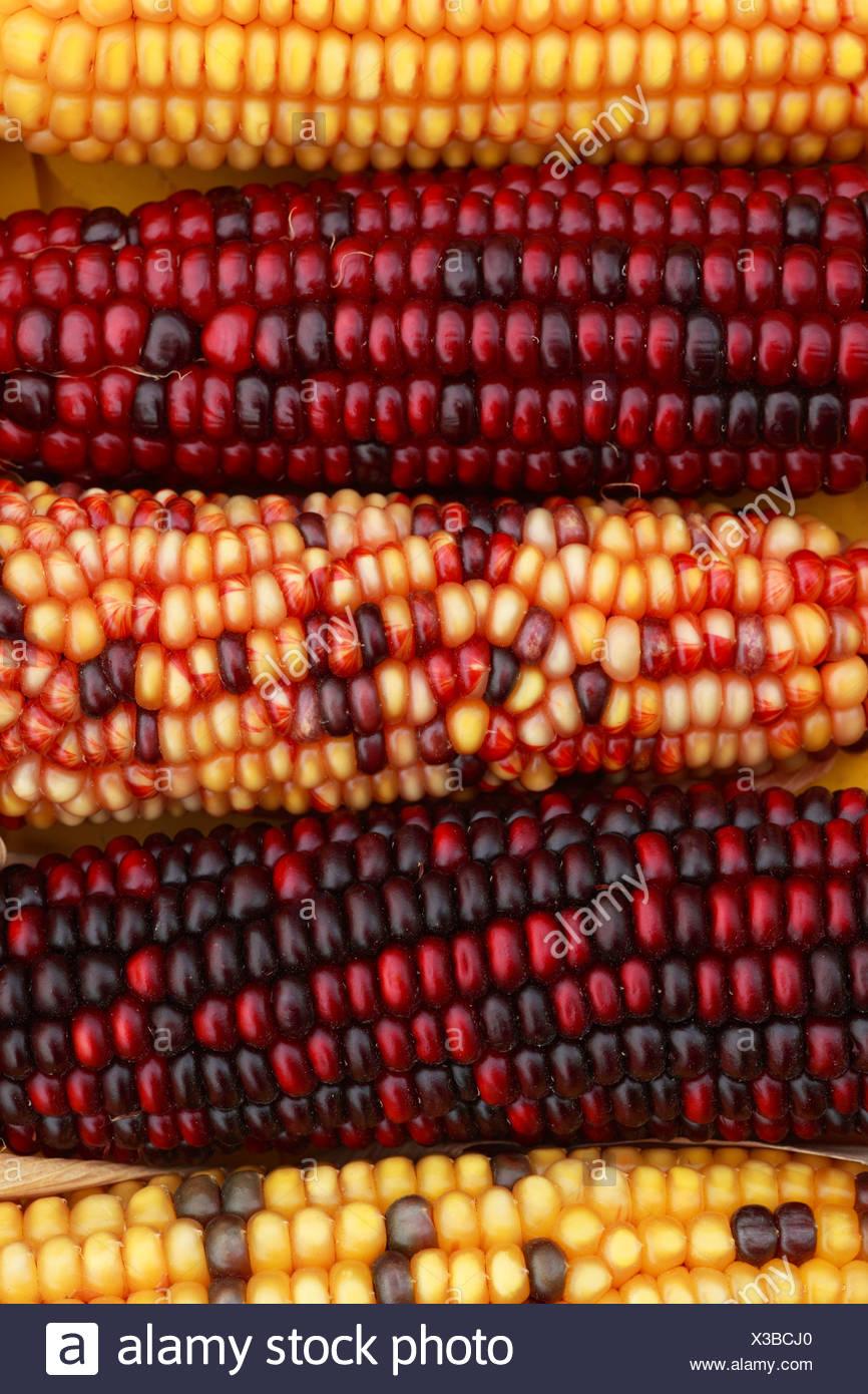 Ausgezeichnet Mais Färbung Seite Ideen - Entry Level Resume Vorlagen ...