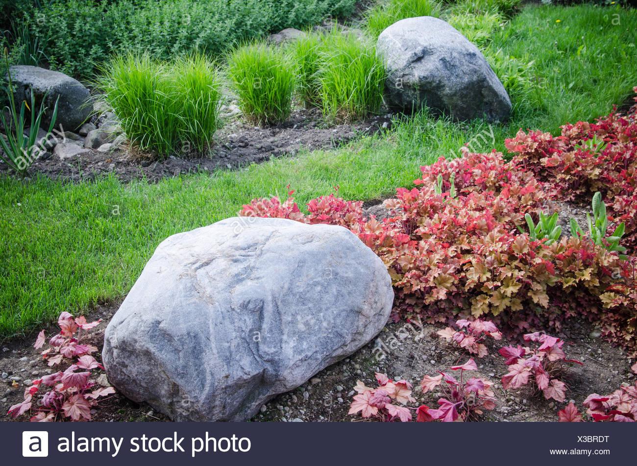 Dekorative Beet in einem Garten mit Steinen und Pflanzen, close-up ...