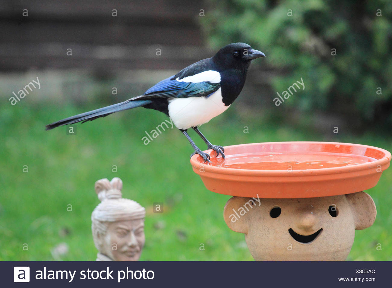 garden bird stockfotos garden bird bilder alamy. Black Bedroom Furniture Sets. Home Design Ideas
