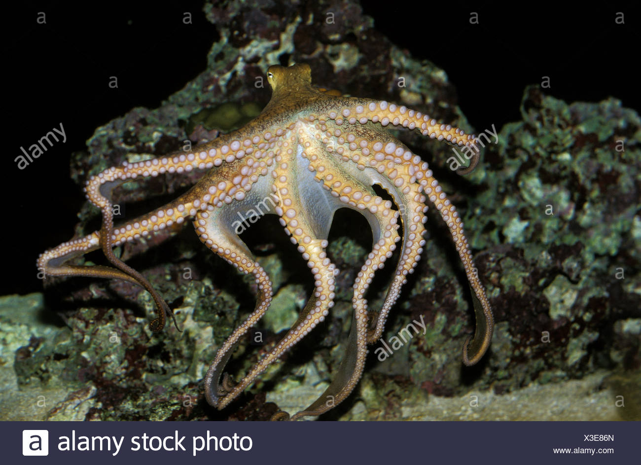 Ziemlich Tintenfisch Färbung Seite Bilder - Malvorlagen Von Tieren ...