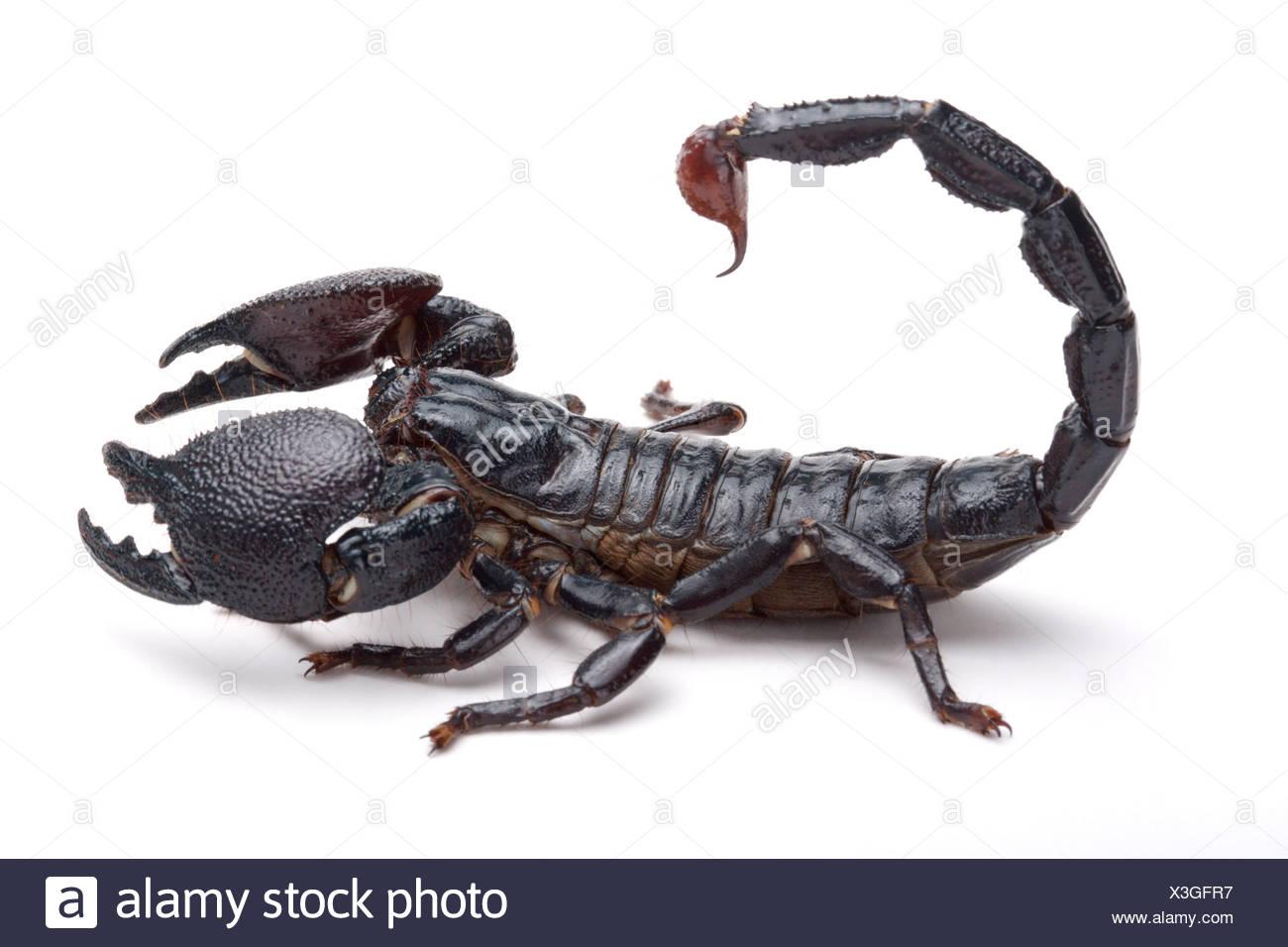 scorpion Stockfotos & \'scorpion Bilder - Seite 10 - Alamy