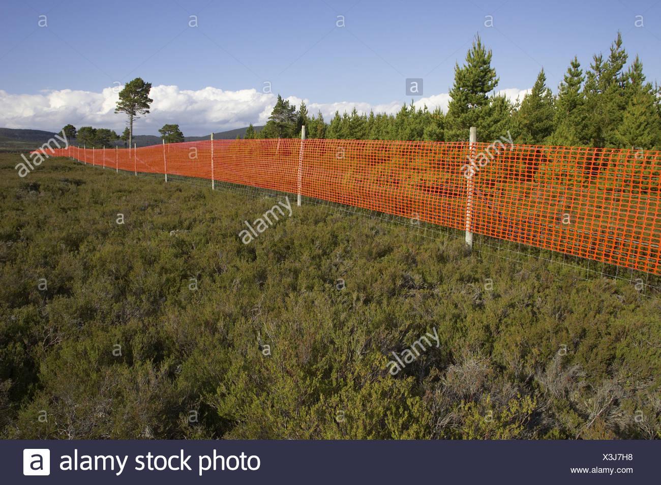 Orange Mesh Befestigt An Reh Zaun Sichtbarkeit Erhohen Und