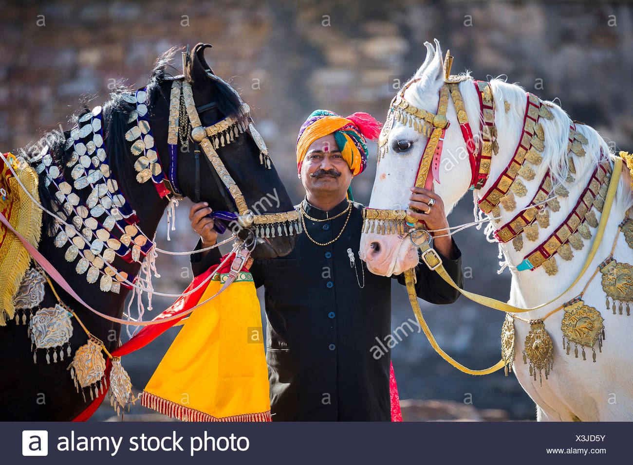 Marwari Pferde. Paar verzierte tanzenden Pferden mit stolzer Besitzer. Rajasthan, Indien Stockbild