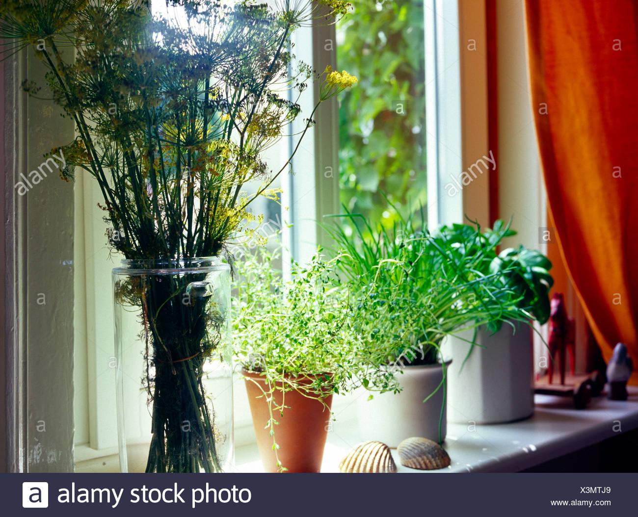 Kräuter für die Küche auf der Fensterbank Stockfotografie - Alamy