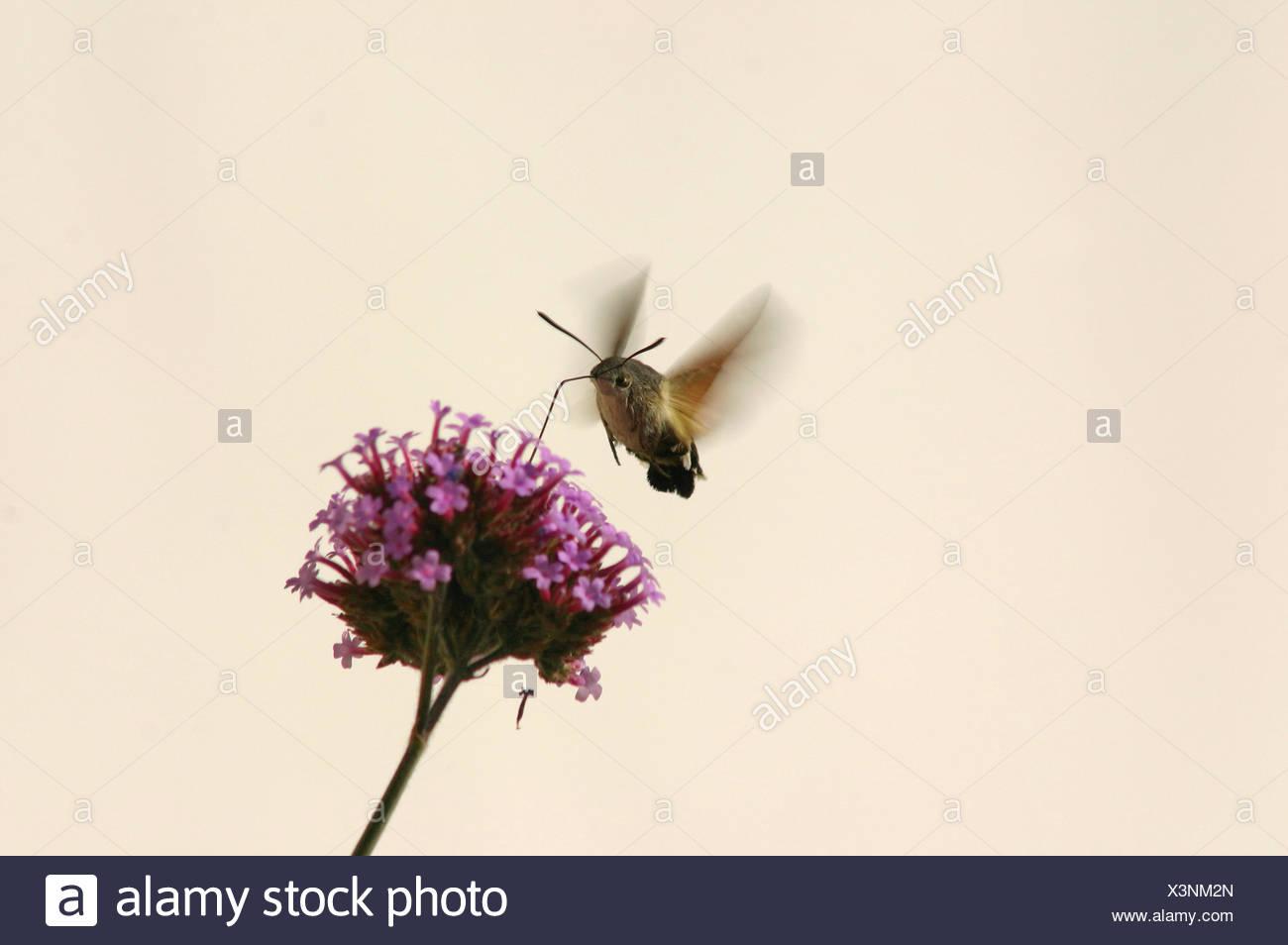 Tolle Frühling Schmetterlinge Färbung Seiten Bilder - Framing ...