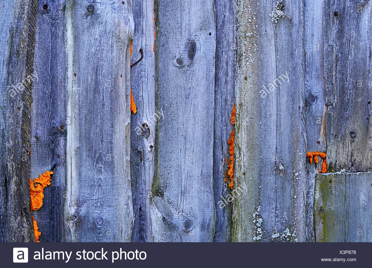 Zaun Aus Holzbrettern Hautnah Stockfoto Bild 277699276 Alamy