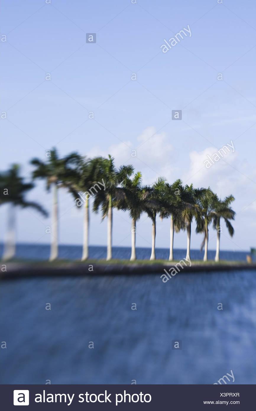 USA, Florida, Miami, Cutler Ridge, Deering Estate, Landzunge, Palmen, Unschärfe, Nordamerika, Reiseziel, Sehenswürdigkeit, Kultur, Meer, Himmel, Außen, Menschenleer, Konzept, Urlaub, Reise, Stockbild