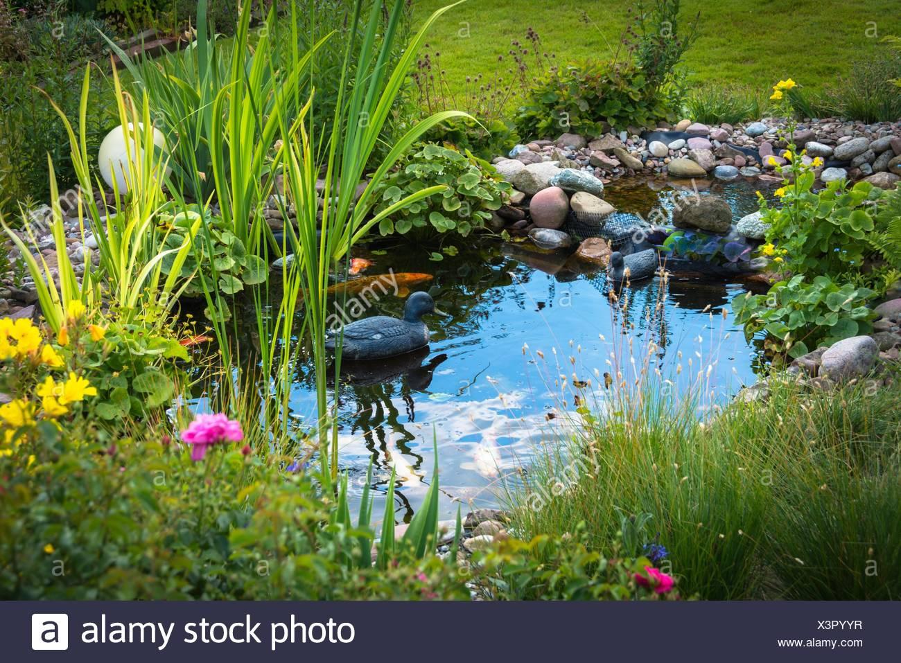 Garten-Teich mit Ente Stockfoto, Bild: 277714747 - Alamy