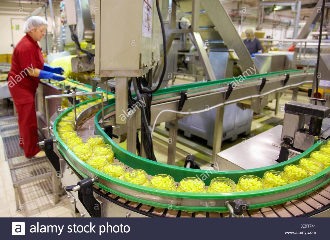 Produktionslinie von Gemüsekonserven und Bohnen in Glasflasche, Mais, Mais, Konservenindustrie, Agrar-und Ernährungswirtschaft, Logistikzentrum, Stockbild
