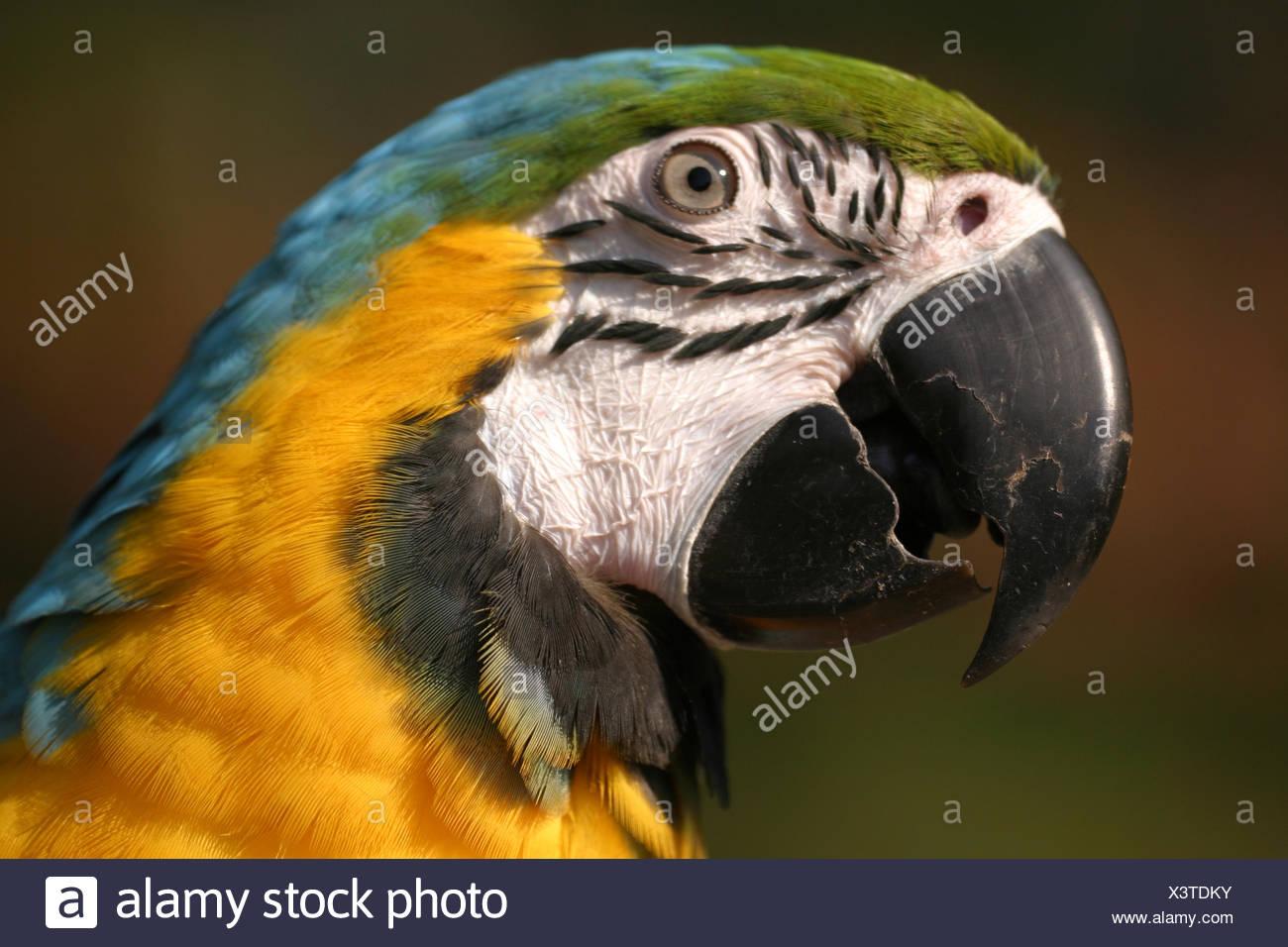 Ungewöhnlich Gelbe Böse Vogel Färbung Seite Fotos - Druckbare ...