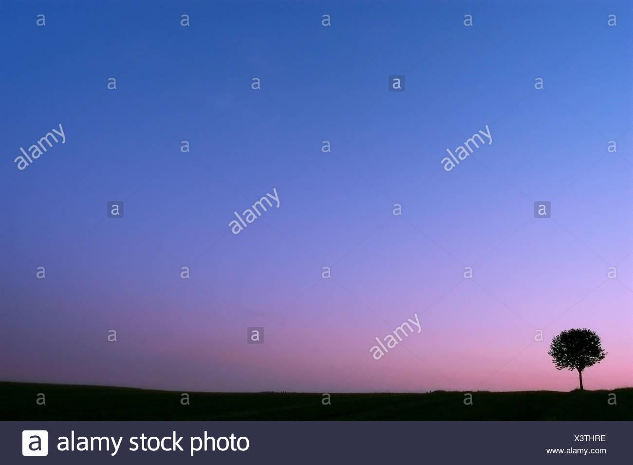 Einsamer Baum vor blauem Himmel nach Sonnenuntergang Stockbild