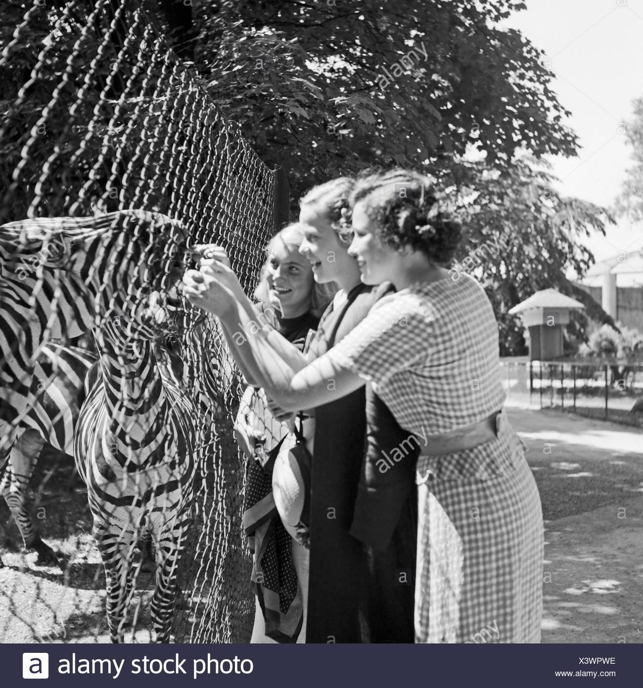 Drei Junge Frauen bin Zebragehege Im Wilhelma Tierpark in Stuttgart, Deutschland, 1930er Jahre. Drei junge Frauen bei der Zebra Verbindung an Wilhelma Zoologischer Gärten in Stuttgart, Deutschland der 1930er Jahre. Stockbild