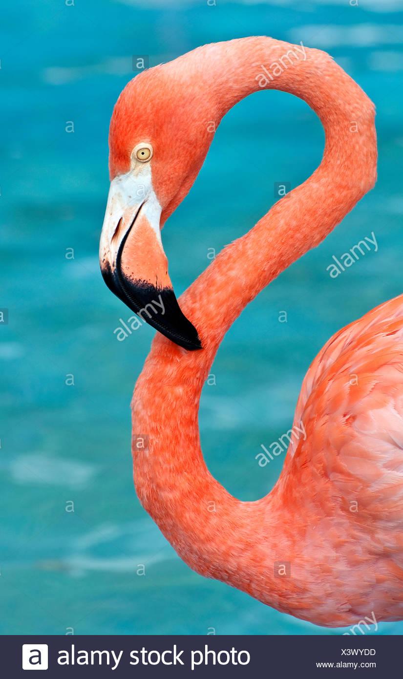 wilde Tiere Vogel Stockbild
