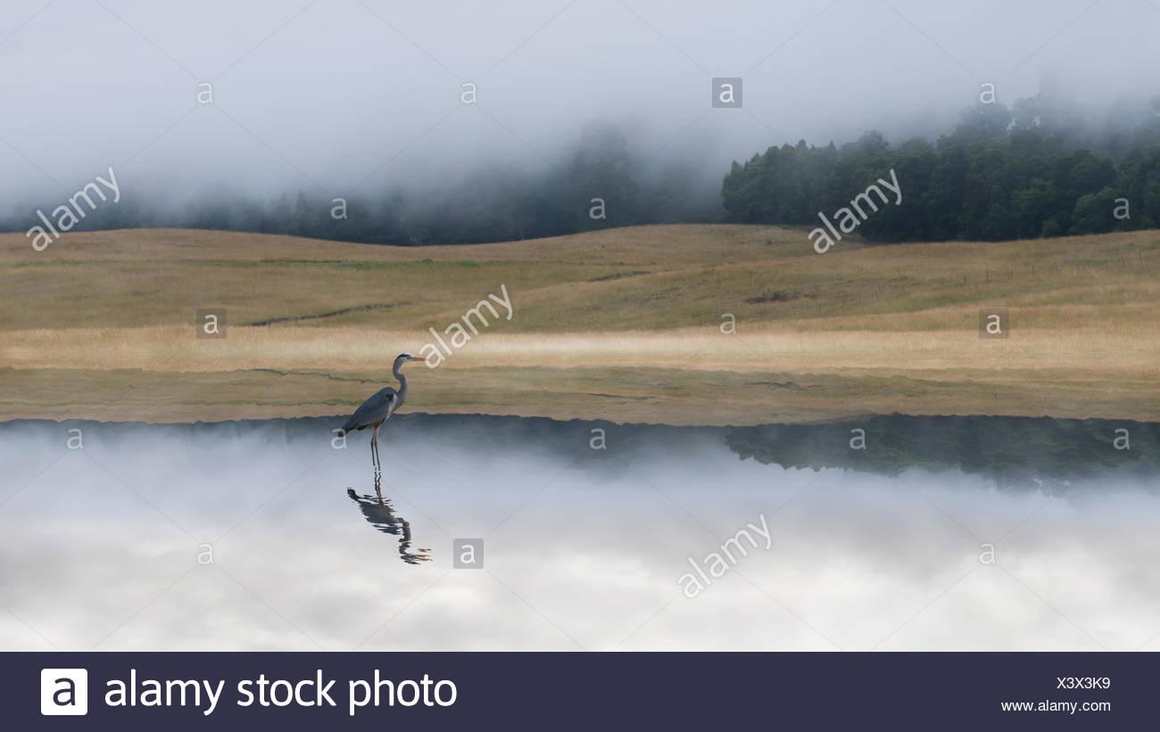 Kranich im See in der Dämmerung Stockbild