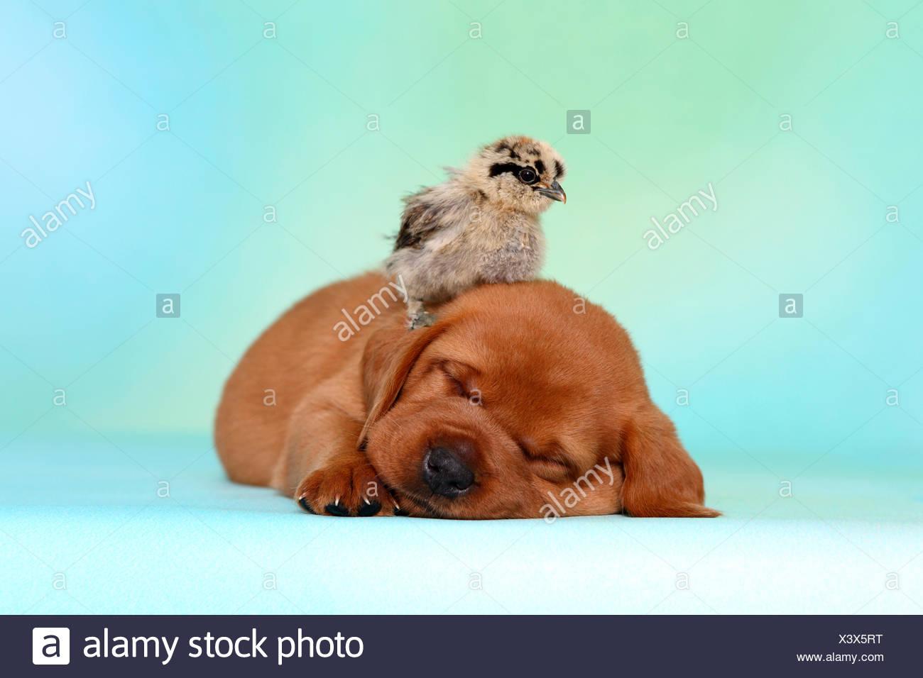 Wunderbar Huhn Farbe Seite Fotos - Druckbare Malvorlagen ...