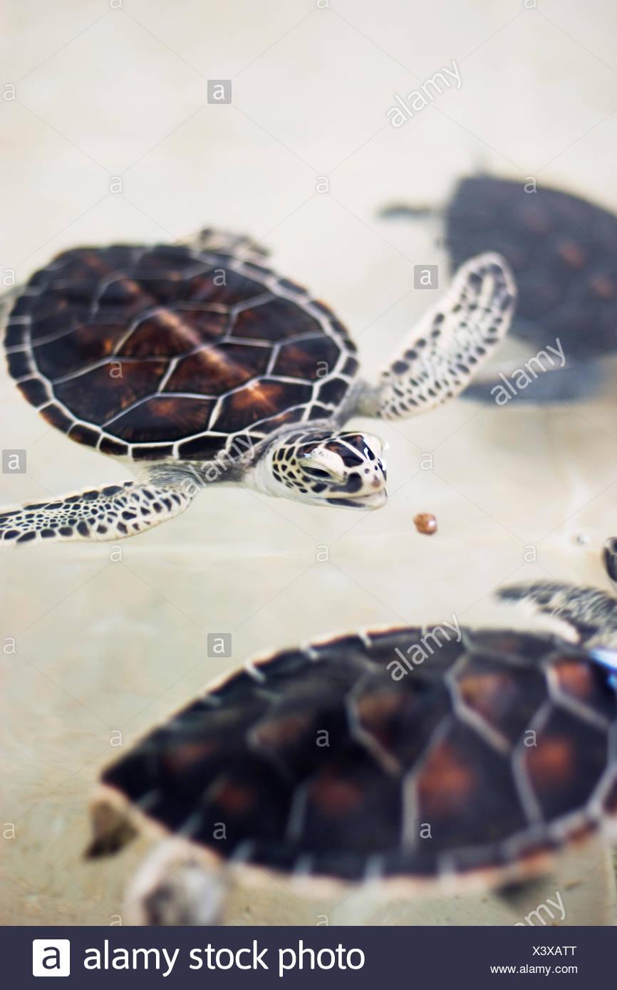 Groß Süsse Meeresschildkröte Färbung Seite Ideen - Entry Level ...