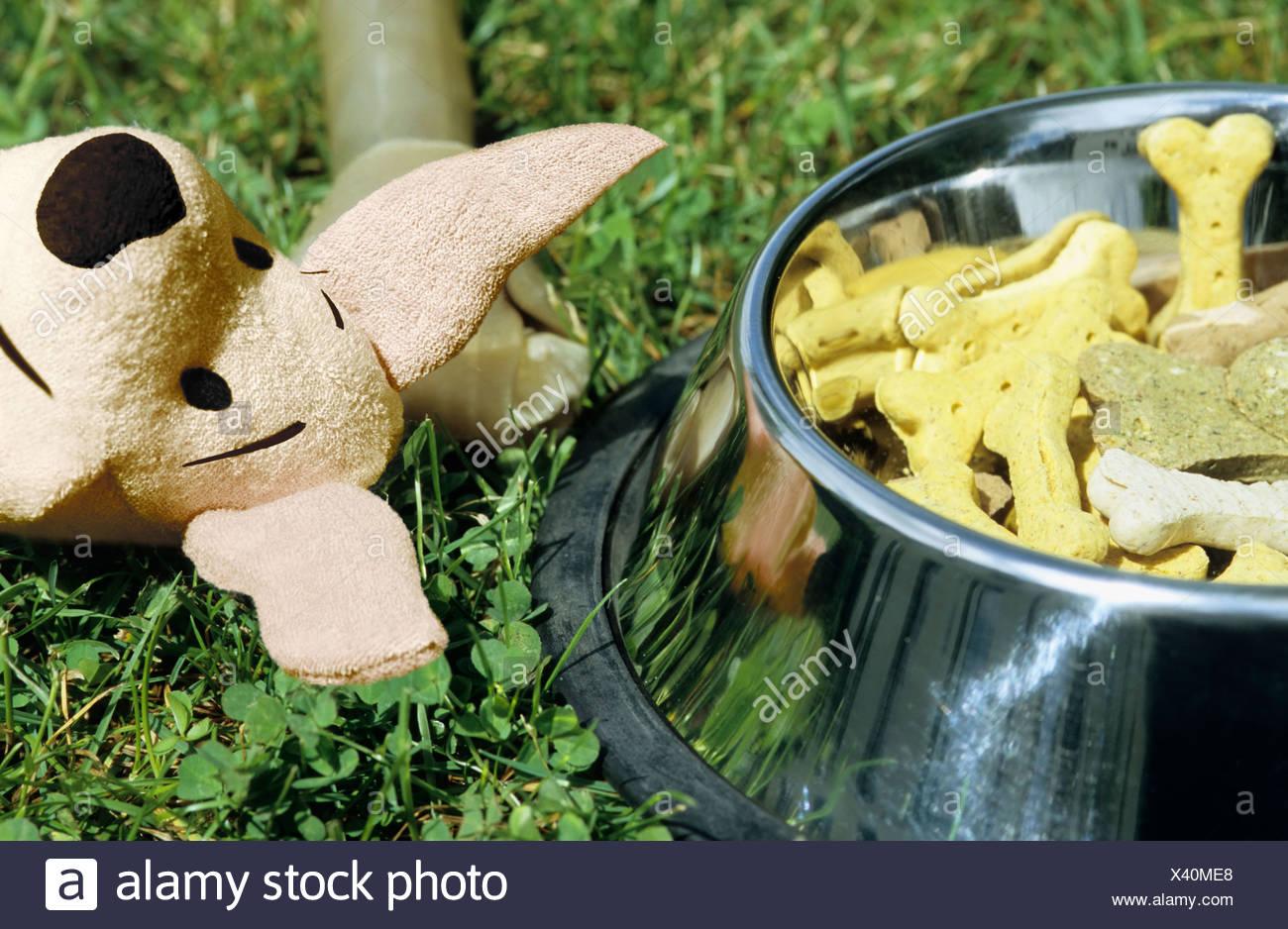 Hundekuchen kauen und Spielzeug Stockbild