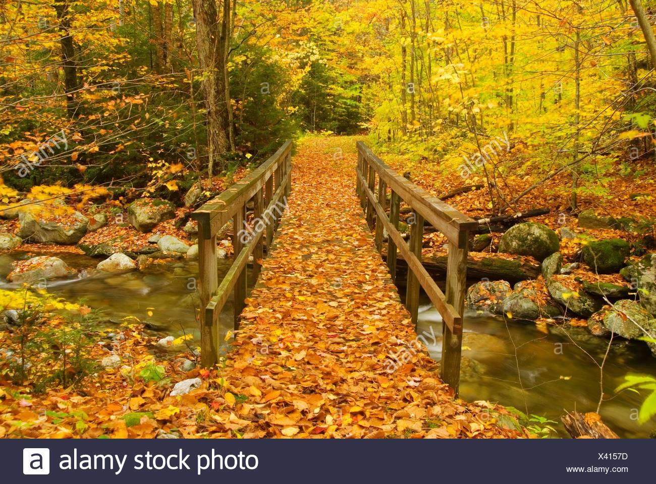 Brücke auf Hancock Zweig Trail, Texas fällt Erholungsgebiet, Green Mountain National Forest, Vermont. Stockbild