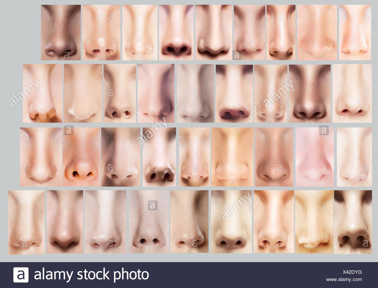 Teile des Körpers. Große Auswahl an Damen Nasen. Satz der ...