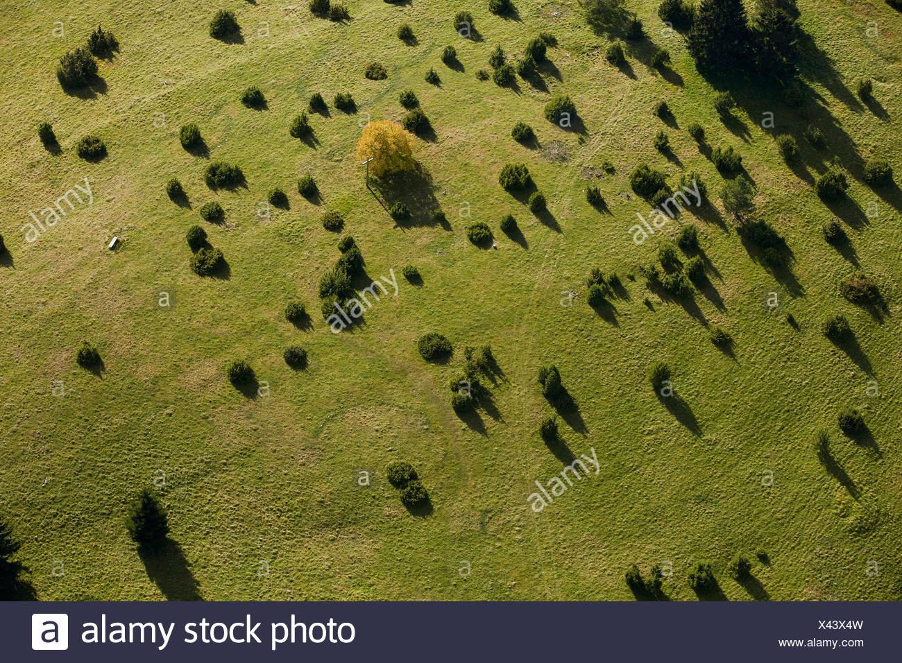 Wacholder Heide auf der Schwäbischen Alb, Baden-Württemberg, Deutschland, Luftaufnahme Stockbild