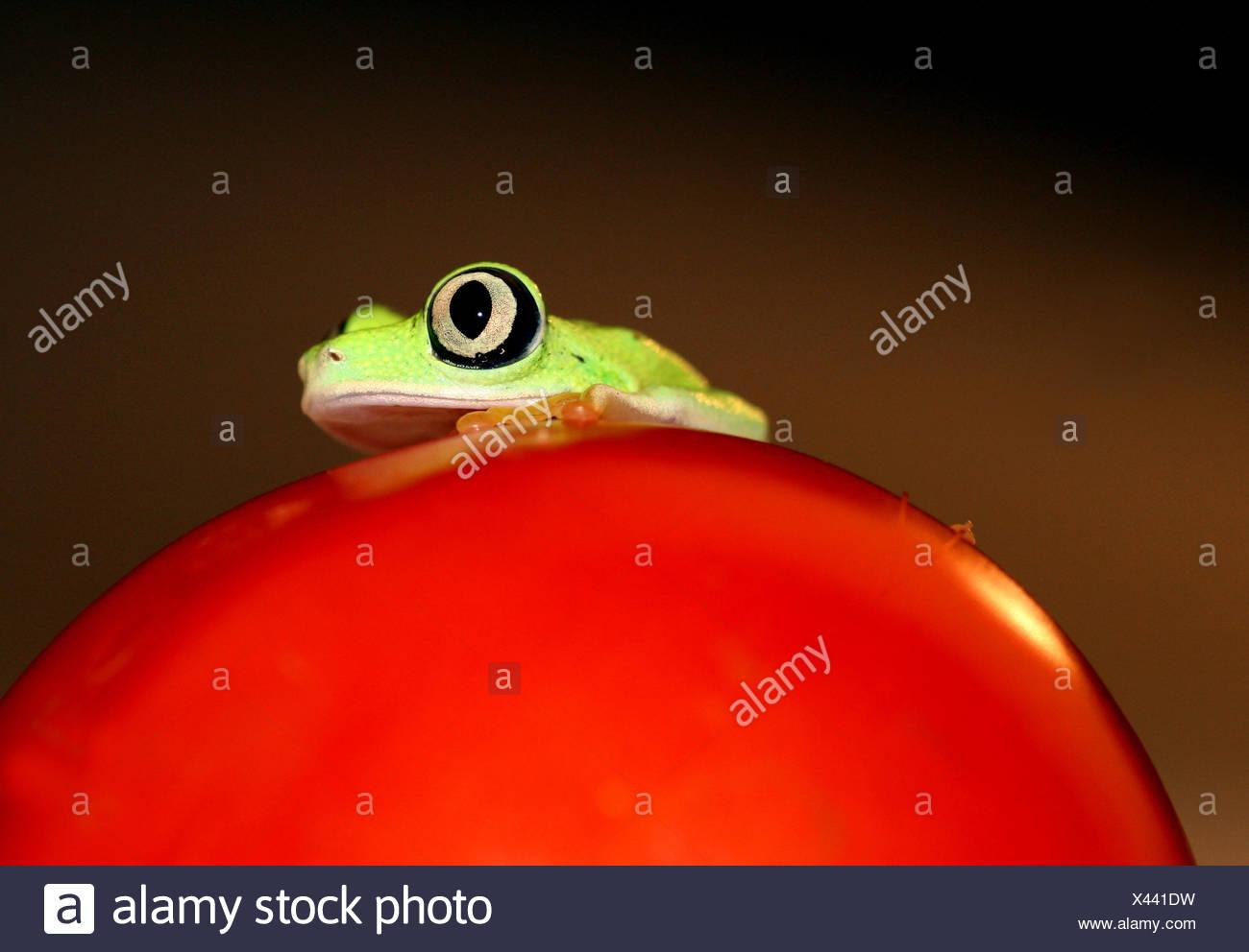 Schön Frosch Bild Zu Färben Fotos - Malvorlagen Von Tieren - ngadi.info