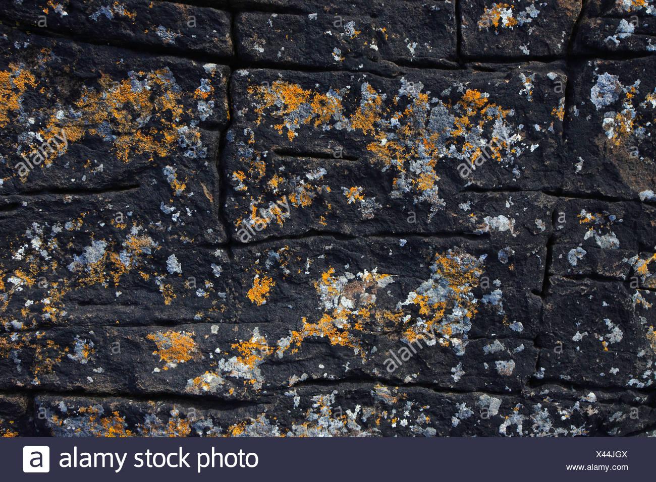 Detail, Steilküste, Küste, Muster, Schottland, Stein, abstrakte, bunten, grafischen, Orange, Flechten, Schottisch Stockbild