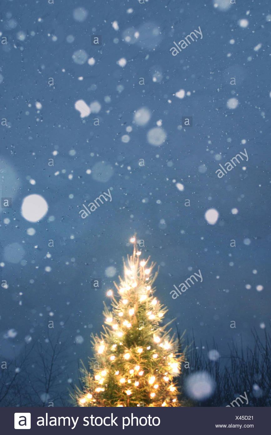 Weihnachtsbaum im Schnee Stockbild