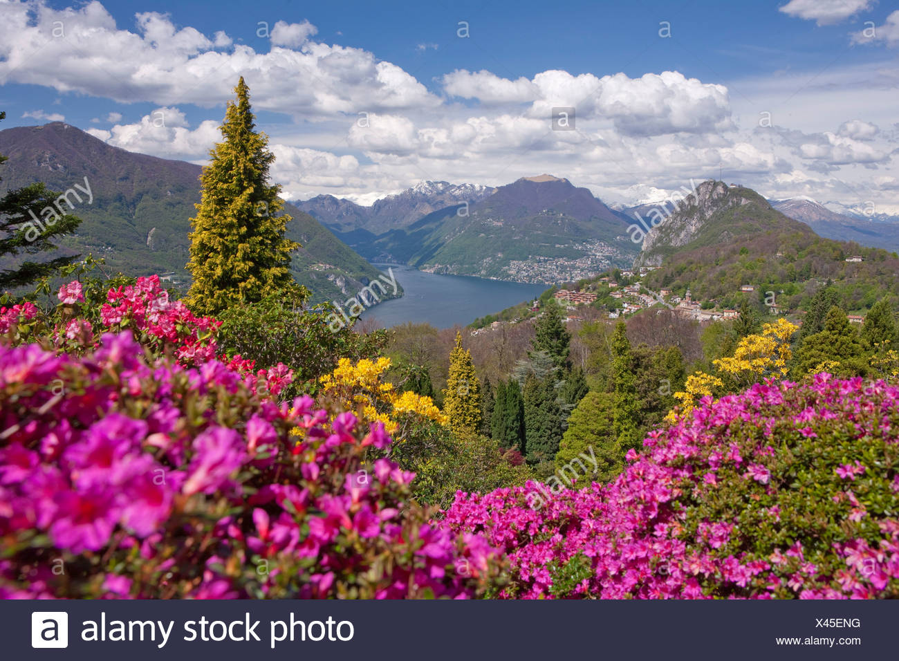 Blüte, Rhododendron, Parco San Grato, Carona, Kanton, TI, Ticino, Südschweiz, Blume, Blumen, park, Schweiz, Europ Stockfoto