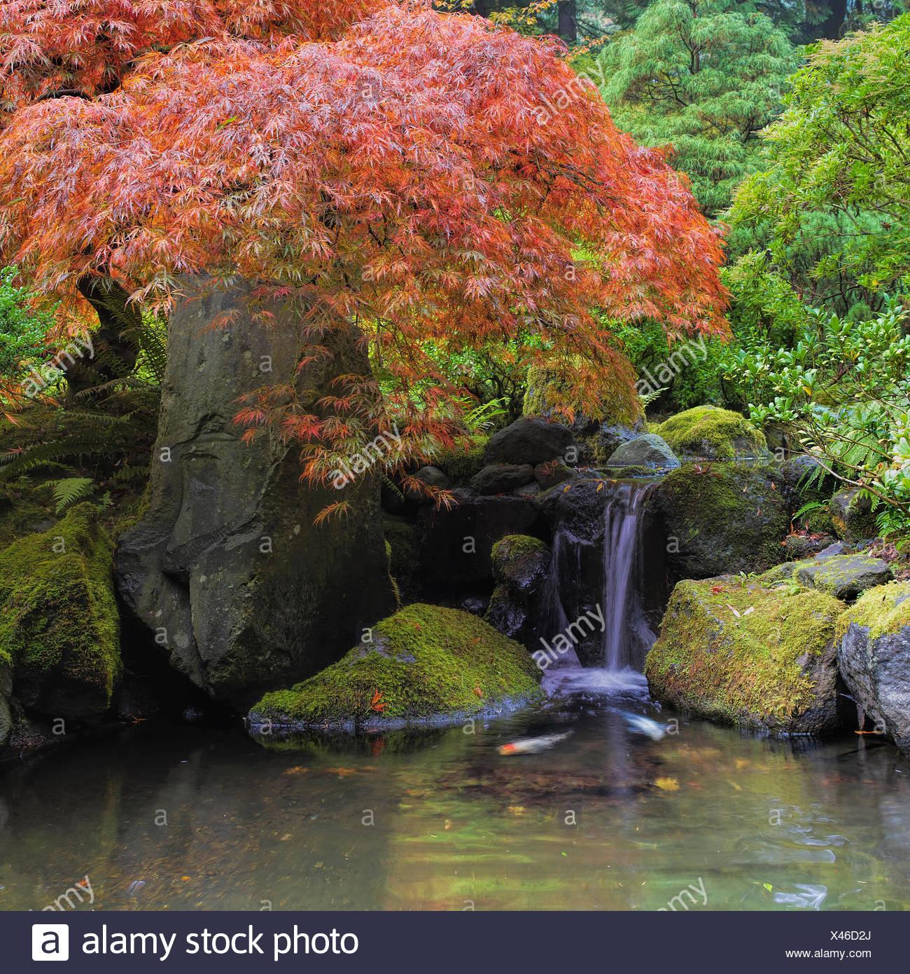 japanese garden moss fountain stockfotos japanese garden. Black Bedroom Furniture Sets. Home Design Ideas