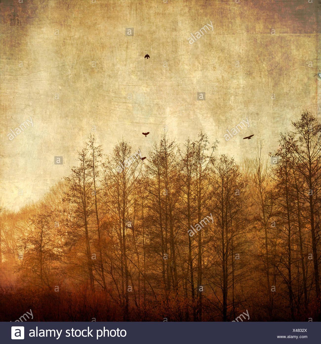 Bäume und fliegende Vögel im Morgenlicht, strukturierte Effekt Stockbild