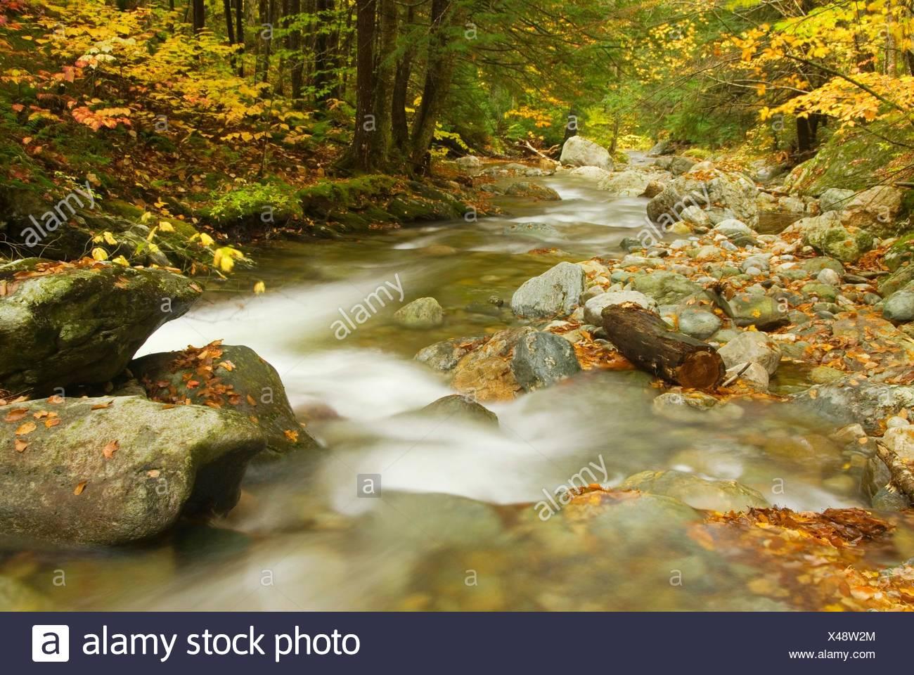 Hancock Zweig des White River entlang Hancock Zweig Trail, Texas fällt Erholungsgebiet, Green Mountain National Forest, Vermont. Stockbild