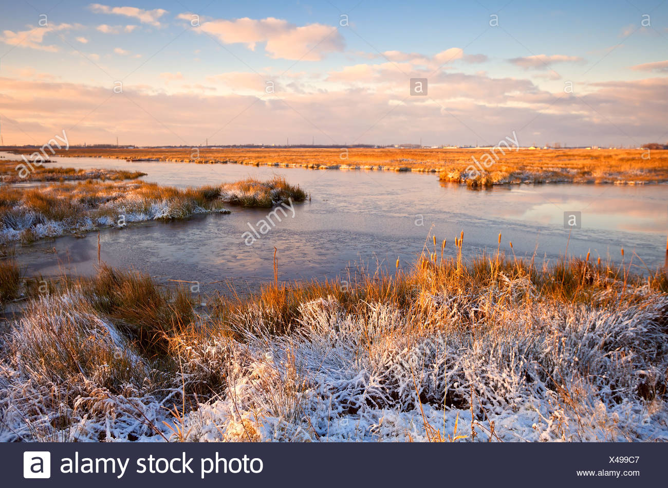 Sonnenaufgang über dem Sumpf im winter Stockbild