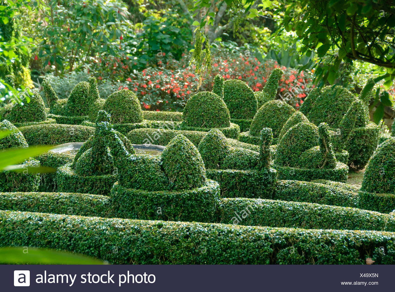 buxus hedge stockfotos buxus hedge bilder alamy. Black Bedroom Furniture Sets. Home Design Ideas