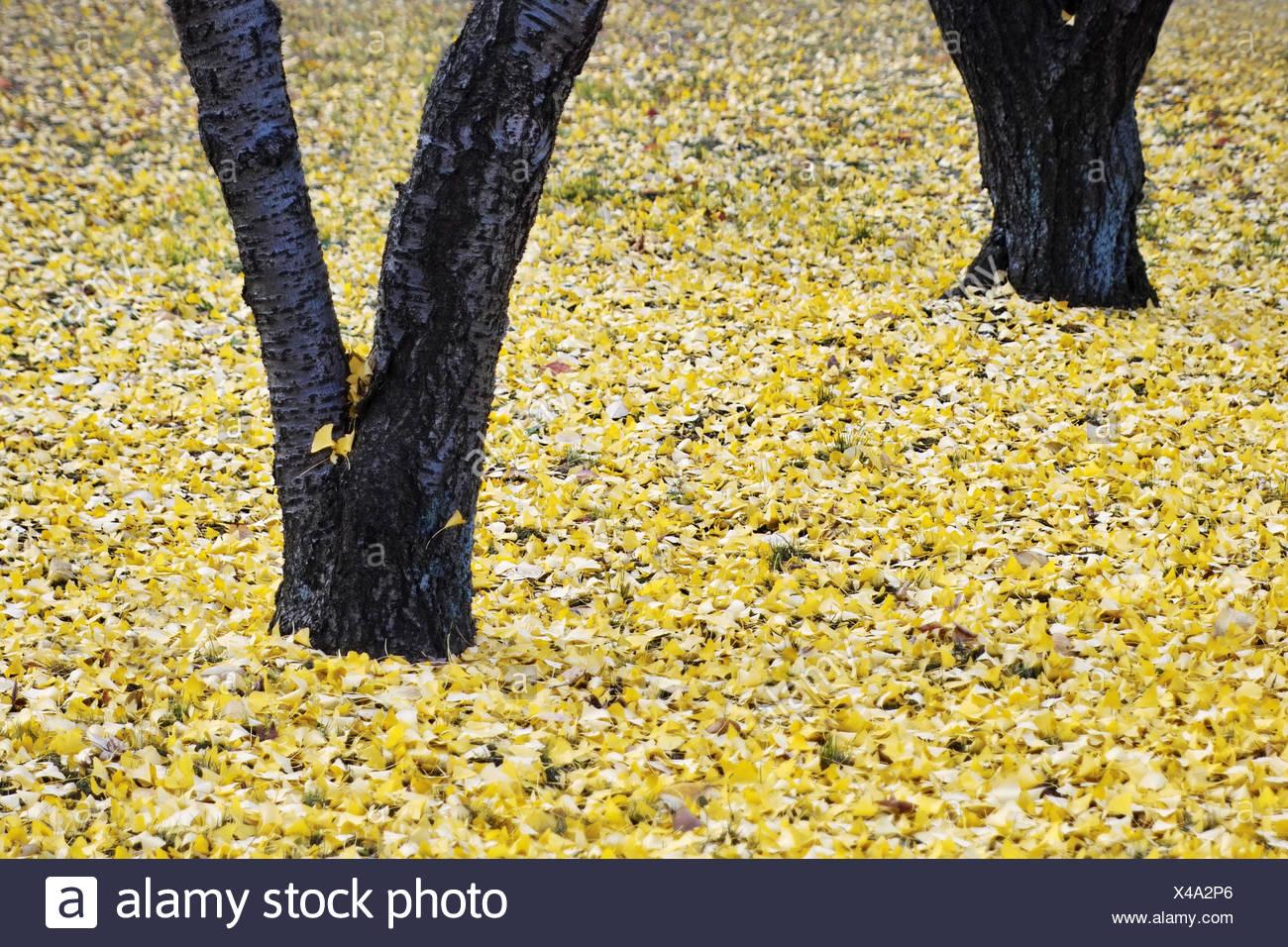 Tolle Gelbe Malvorlagen Fotos - Malvorlagen Von Tieren - ngadi.info