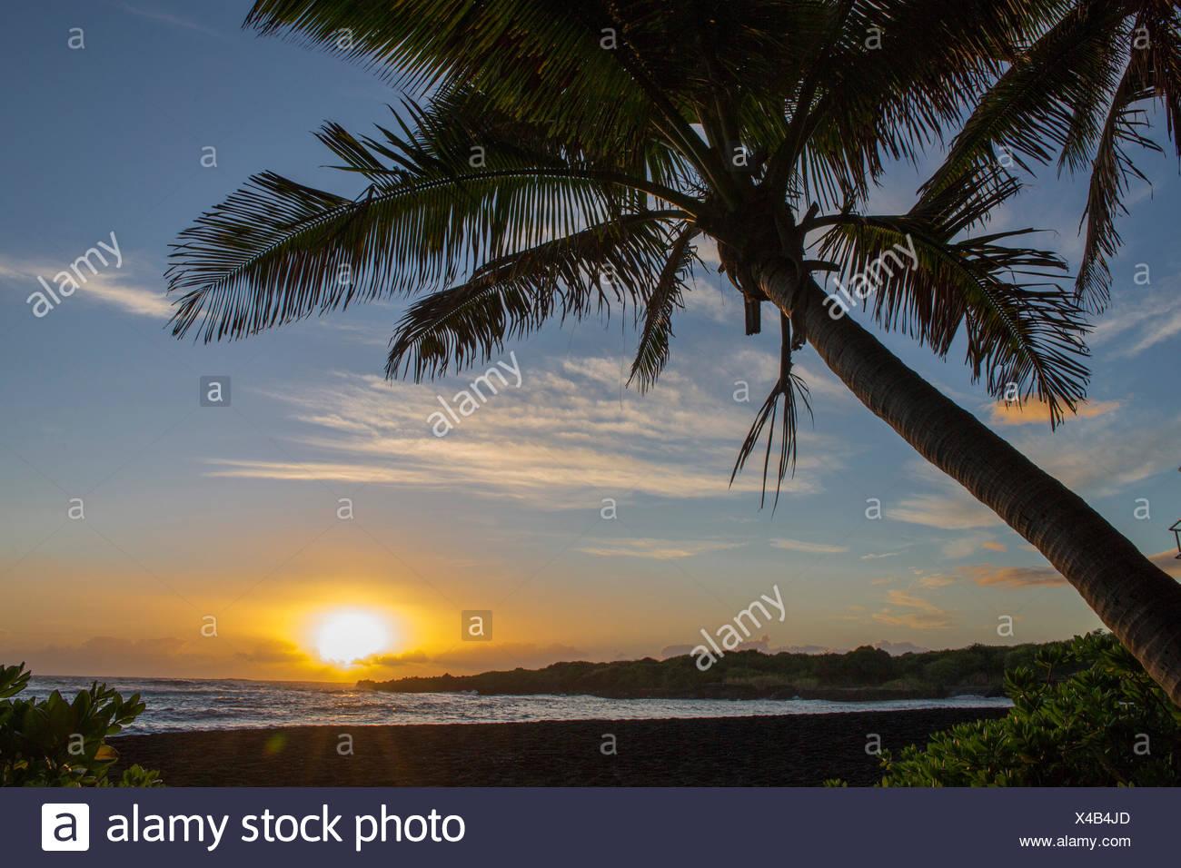 Big Island, Palmen, Punaluu Black Sand Beach, Big Island, USA, Hawaii, Amerika, Sonnenaufgang, Stockbild