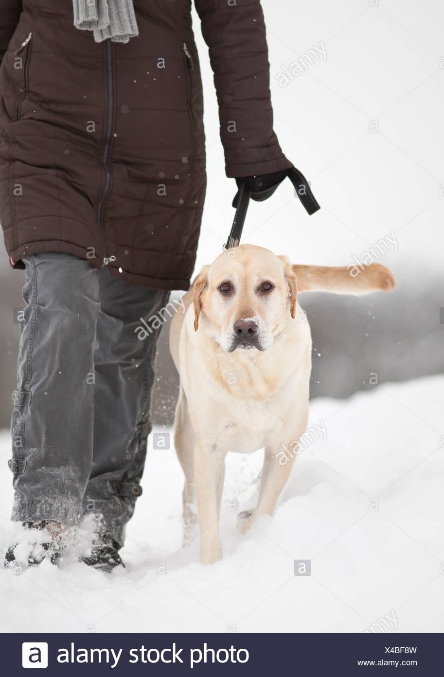 frau wird von hund gedeckt