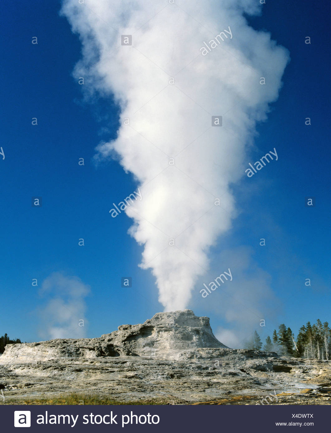 Dampf steigt von Castle-Geysir, Yellowstone-Nationalpark, Rocky Mountains, Wyoming, USA Stockbild