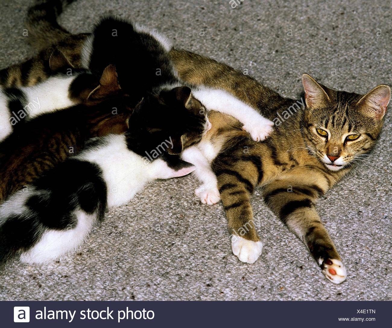 Kittens Zoology Stockfotos & Kittens Zoology Bilder - Alamy