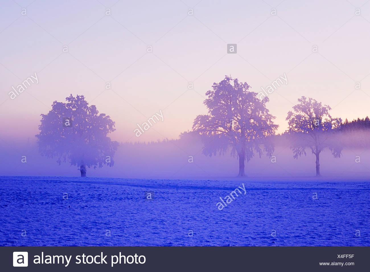 Winterlandschaft, eingehüllt in Nebel, Horben, Aargau, Schweiz, Europa Stockbild