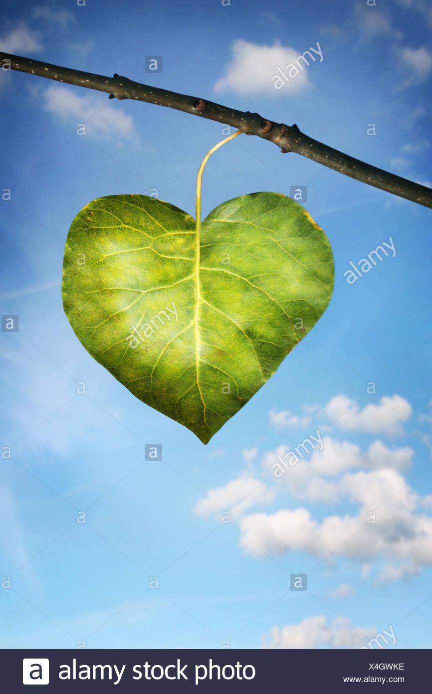 einzelnes Blatt in der Form eines Herzens Stockbild