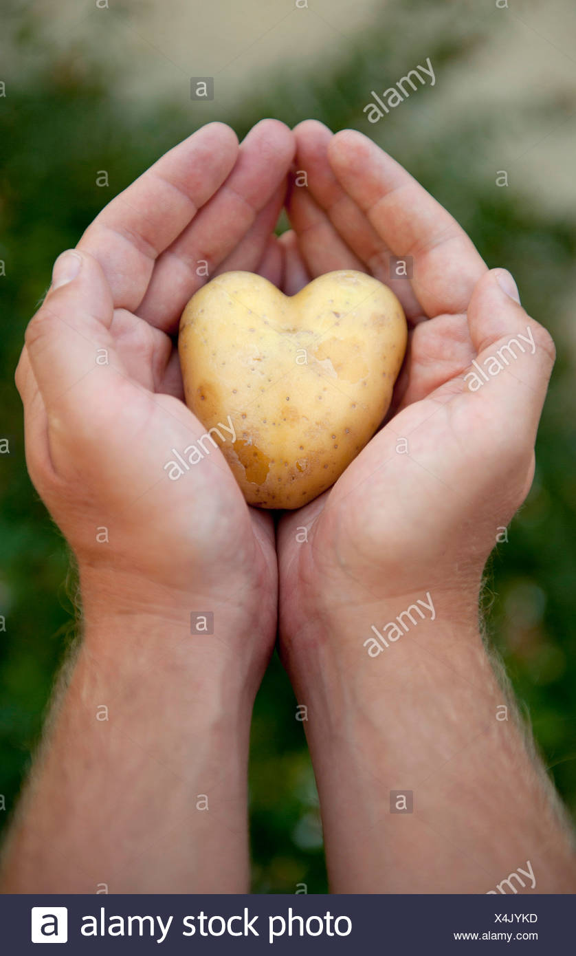 Nahaufnahme der menschlichen Hand, die Kartoffel Stockbild