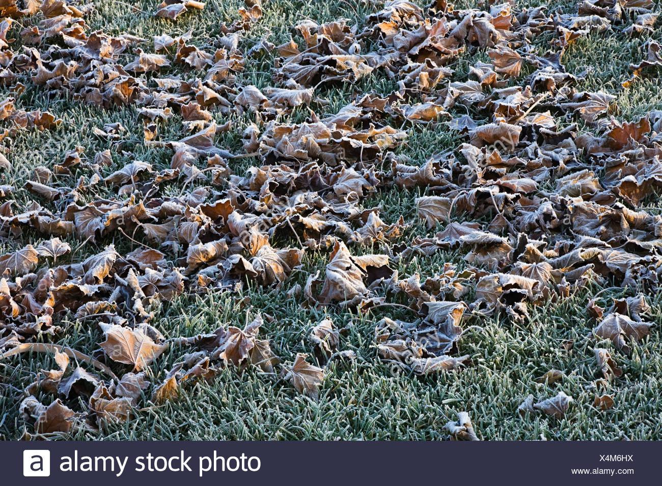 Laub und frostigen Boden Stockfoto