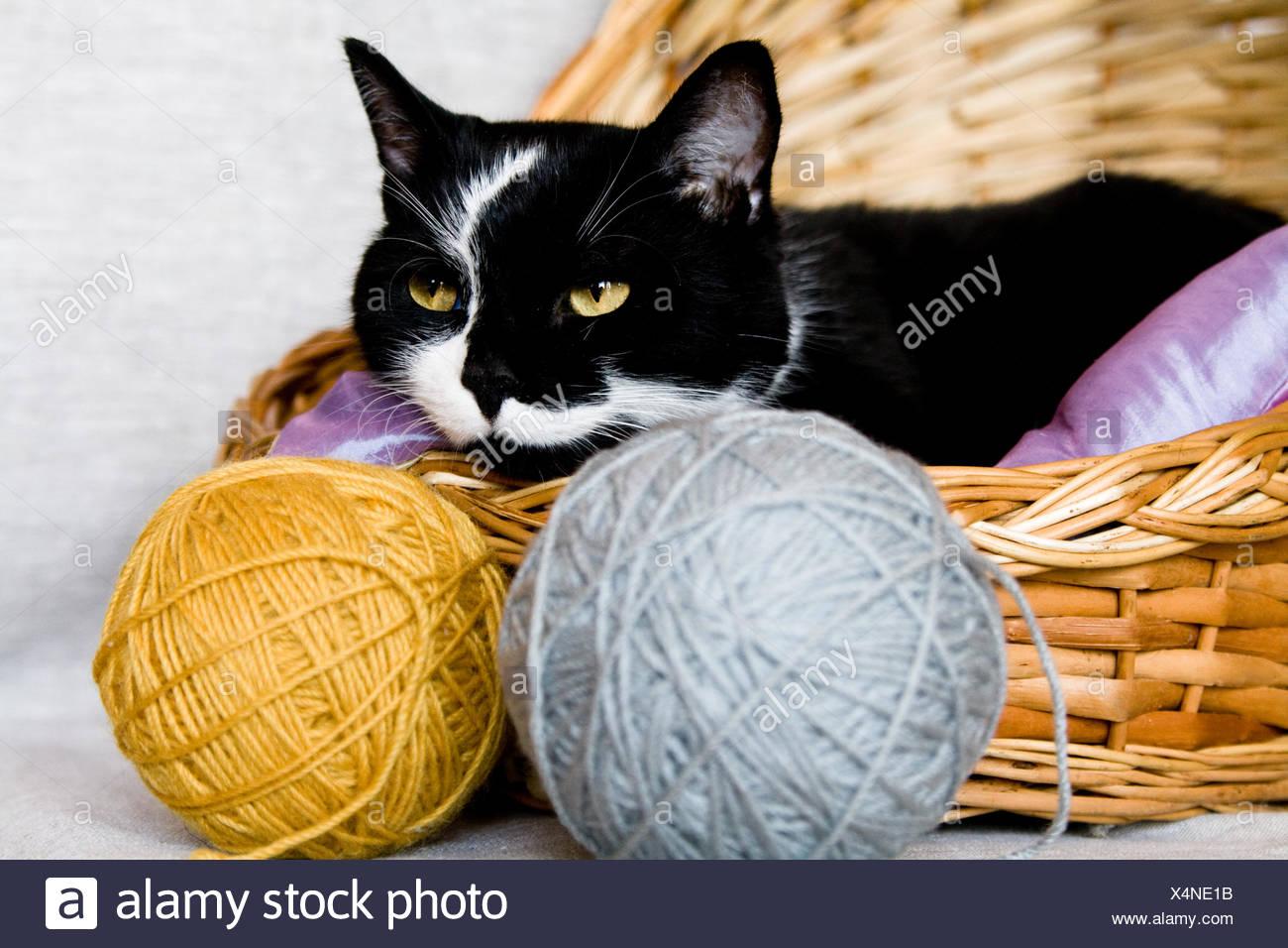 Cat In Knitting Stockfotos & Cat In Knitting Bilder - Alamy