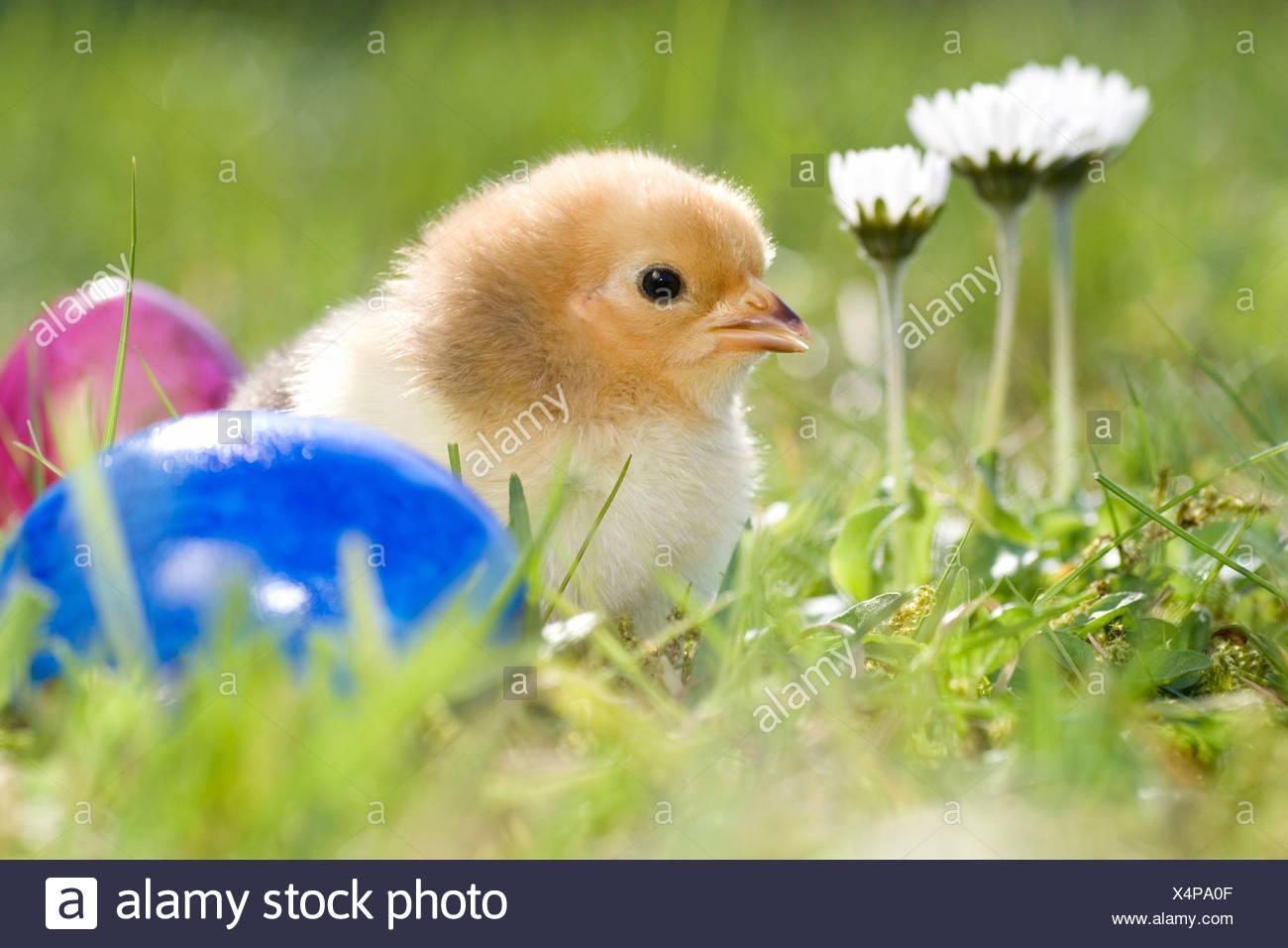 Wunderbar Ostern Küken Färbung Seite Ideen - Malvorlagen Von Tieren ...