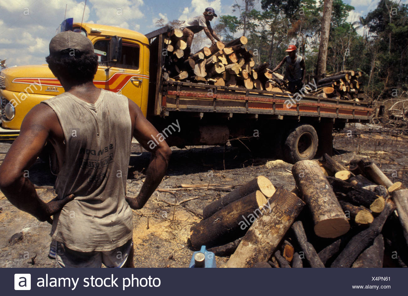 logging truck rainforest stockfotos logging truck rainforest bilder alamy. Black Bedroom Furniture Sets. Home Design Ideas