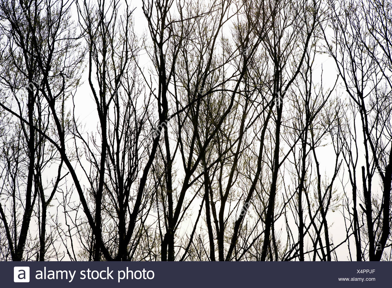 Silhouette der Bäume Stockbild
