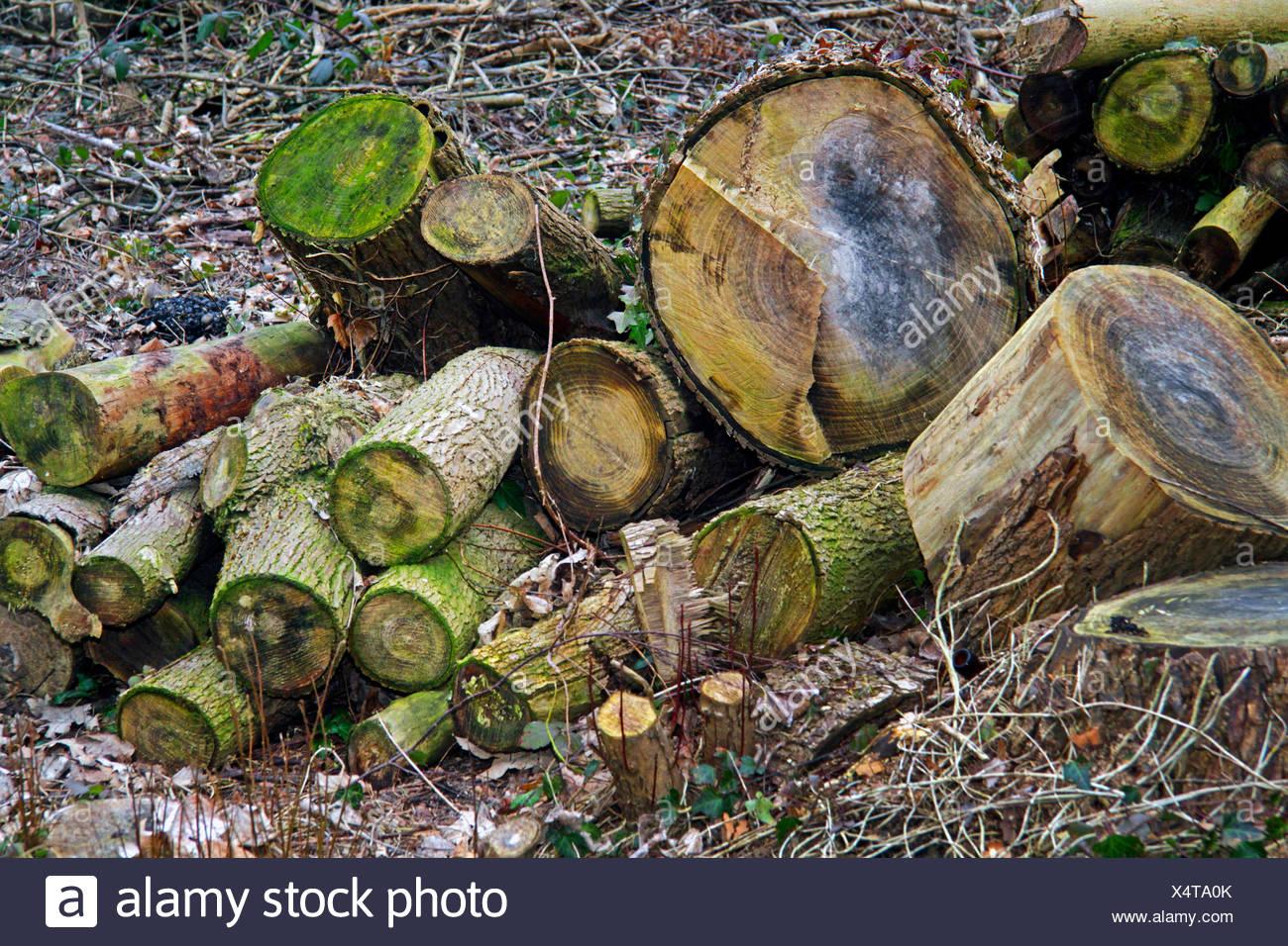 Holzstaemme Im Wald Nach Einer Rodung Im Zweiten Jahr, Deutschland | alte Protokolle in einer Lichtung, Deutschland | BLWS423582.jpg [(C) blic Stockbild