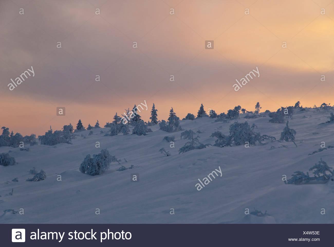 Arktis, Baum-Grenze, boreal, Nadel-Wald, Einsamkeit, Europa, Finnland, Fjell, Fjall, Kiilopaa, kalt, Lappland, Melancholie, Stockbild